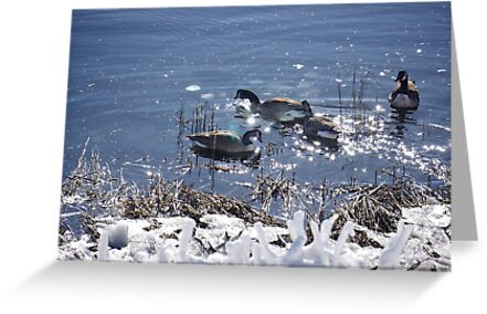 "Winter geese with a ""sparkle"" ! by Nancy Richard"