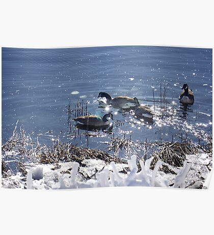 "Winter geese with a ""sparkle"" ! Poster"