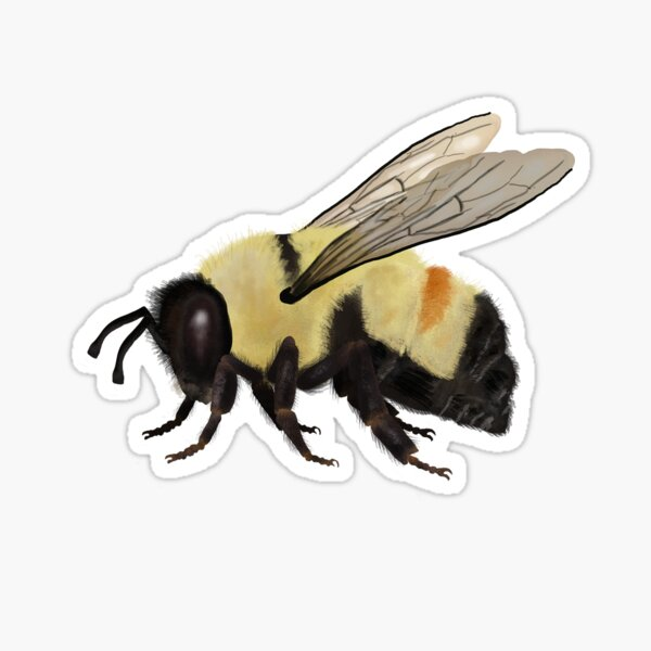 Bombus affinis is the best! Sticker