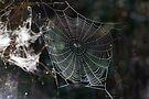 Spider's Web 2 by David Clarke