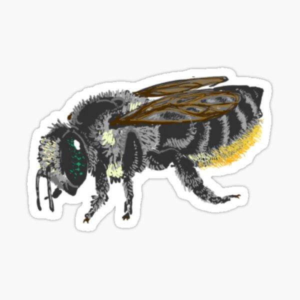 Megachilidae - Megachile mendica Sticker