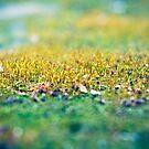 Moss in the Garden by Jakov Cordina