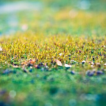Moss in the Garden by ill-tempered