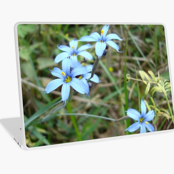 Blue-eyed Grass Laptop Skin