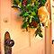 Festive Christmas doors