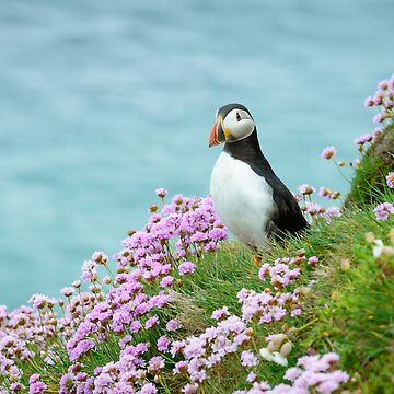 Puffin in Sea Pinks, Saltee Islands, County Wexford, Ireland by AndyJones