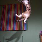 Jumping kitten by turniptowers