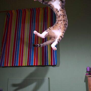 Jumping kitten by turniptowers