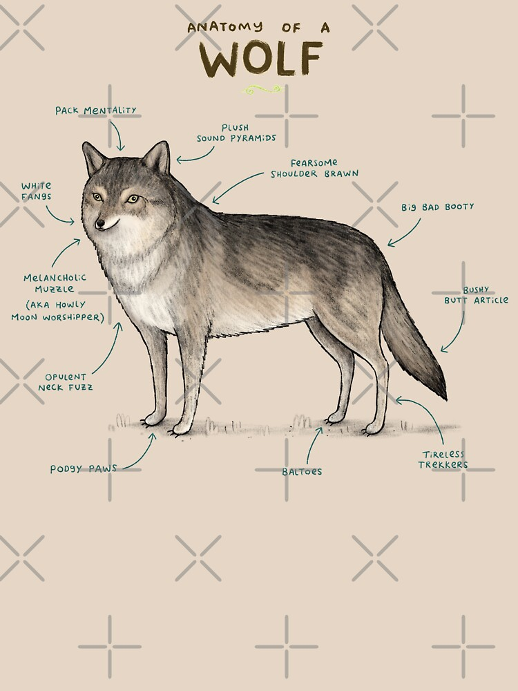 Anatomy Of A Wolf Unisex T Shirt By Sophiecorrigan Redbubble
