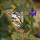 Flutter by Rachel Blumenthal