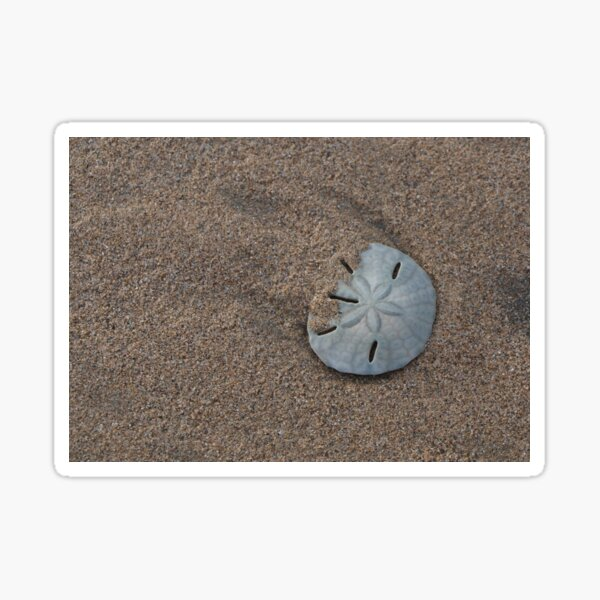 Lonesome sand dollar Sticker