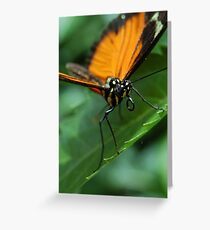 Butterfly Macro Greeting Card