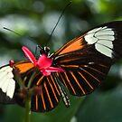 Butterfly Feeding by Rachel Blumenthal