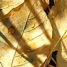 Sun Lit Leaves On The Forest Floor by Tracy Wazny