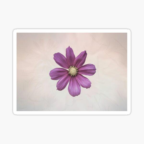 Purple Cosmos Flower Sticker