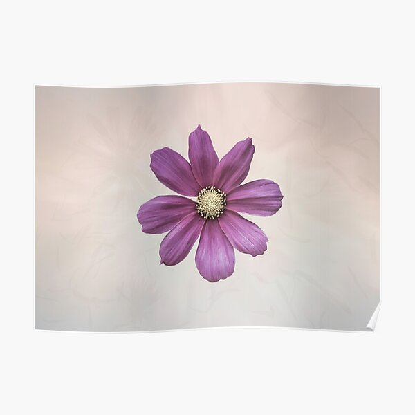 Purple Cosmos Flower Poster
