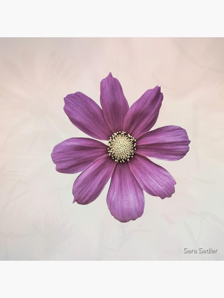 Purple Cosmos Flower by sadler2121