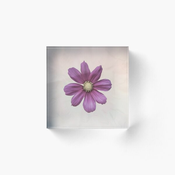 Purple Cosmos Flower Acrylic Block