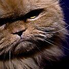 Grumpiest Cat by Rachel Blumenthal