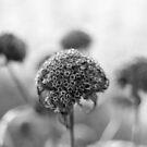 Autumn Flowers by Rachel Blumenthal