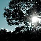 Autumn Sun by Rachel Blumenthal