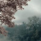 Misty Morning by Rachel Blumenthal