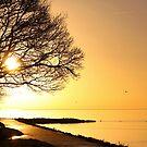 Walk Into A New Day by Jo Nijenhuis