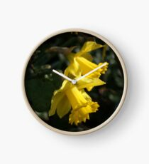 Daffodils announcing spring. Clock