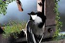Garden Chickadee by Lynda   McDonald