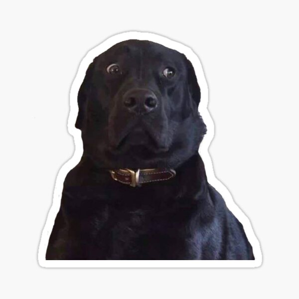 BLACK LABRADOR STARE DOGGO MEME Sticker