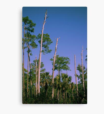 Flatwoods Canvas Print