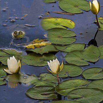 Hammond Pond - frog by LudaNayvelt