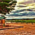 Vineyard Playground by Jennifer Craker