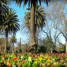 Horsham Botanical Gardens  by cjcphotography
