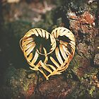 Heart of the Forest by Cloudlingpics