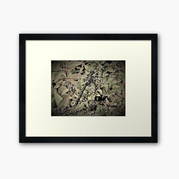 Dragonfly In Hiding Framed Art Print