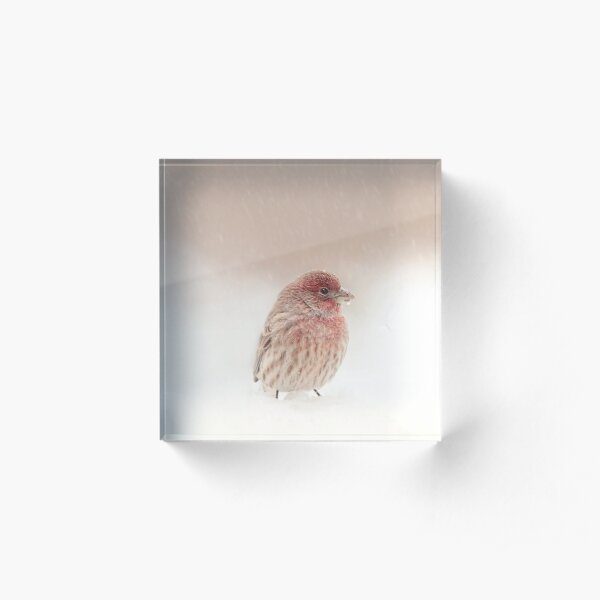 House Finch in Snow 1 Acrylic Block
