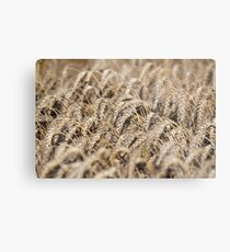 golden wheat field agriculture industry Metal Print
