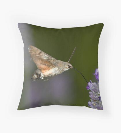 Humming Bird Moth 1 Throw Pillow