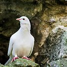 White Pigeon by JEZ22