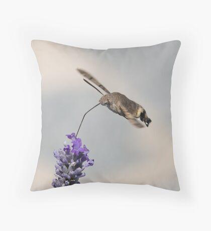 Humming Bird Moth 4 Throw Pillow