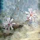 A Pair of Magnolias #2 by Elaine Teague