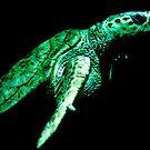 Sea Turtle by Rachel Blumenthal