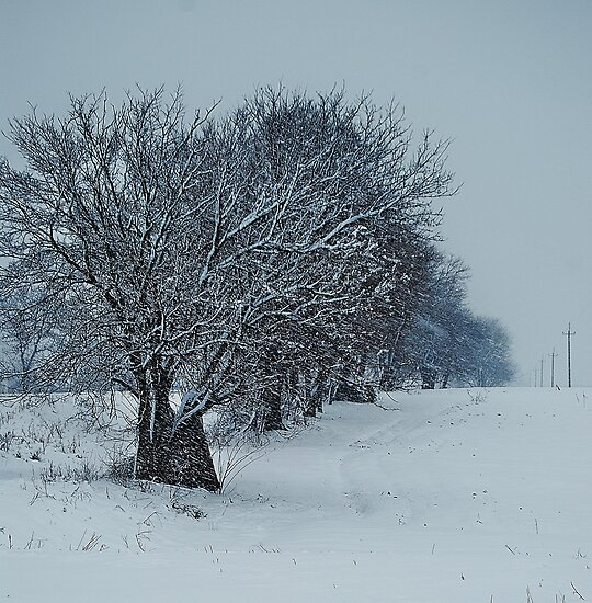 Snow falling on the trees by Mykola