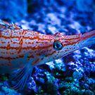 Orange Fish by Rachel Blumenthal