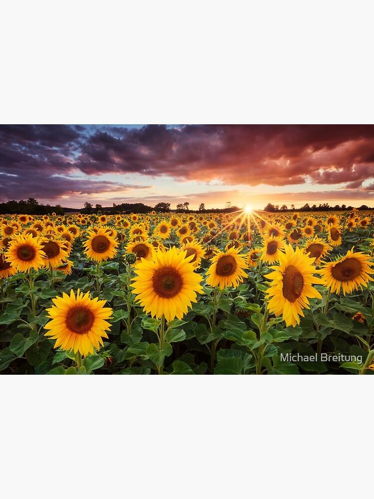 Sunshine by mibreit