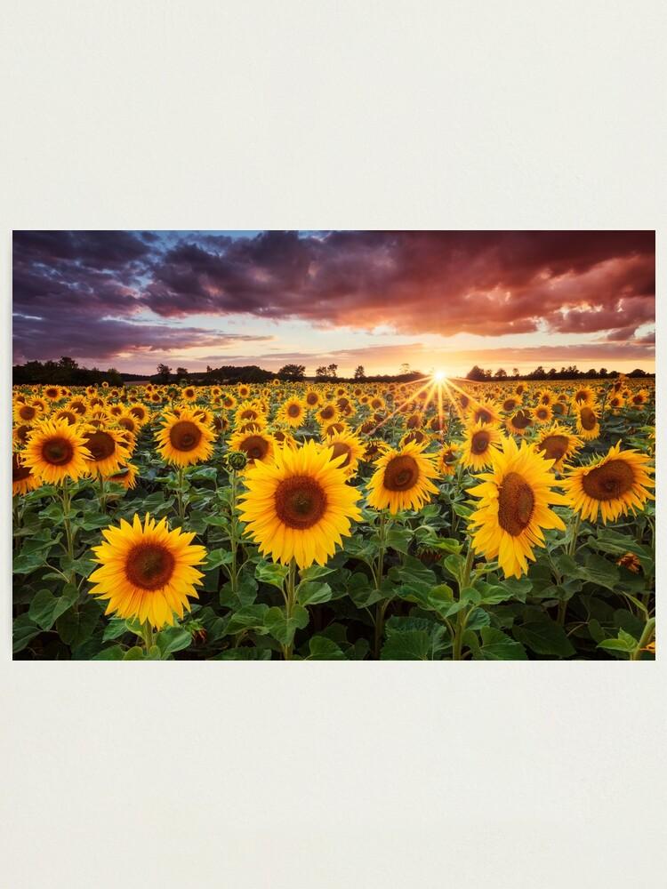 Alternate view of Sunshine Photographic Print