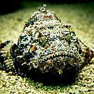 Grumpy Stone Fish by Rachel Blumenthal