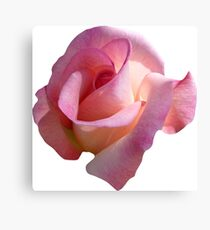 PINK02MEDIUM_00130_SQ5K Canvas Print