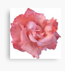 PINK02MEDIUM_00120_SQ5K Canvas Print